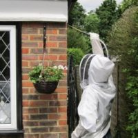removal of a wasps nest